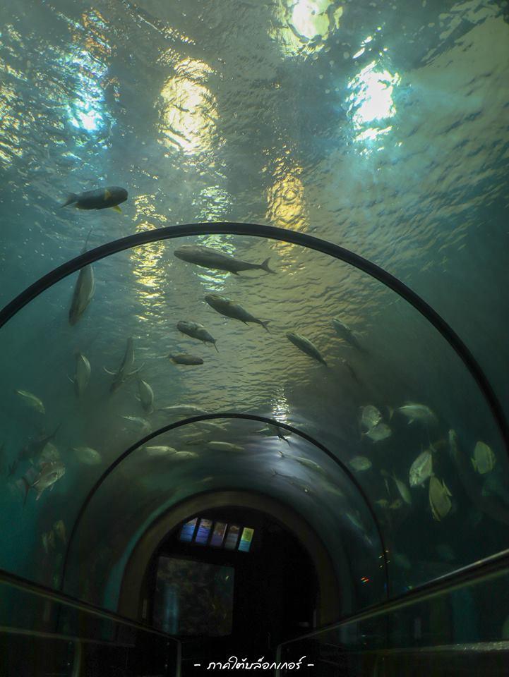 และที่เด็ดสุดคืออุโมงปลาครับ-ค่าเข้าไม่แพงครับ  ภูเก็ต,สถานที่ท่องเที่ยว,ของกิน,จุดเช็คอิน,ที่เที่ยว,จุดถ่ายรูป