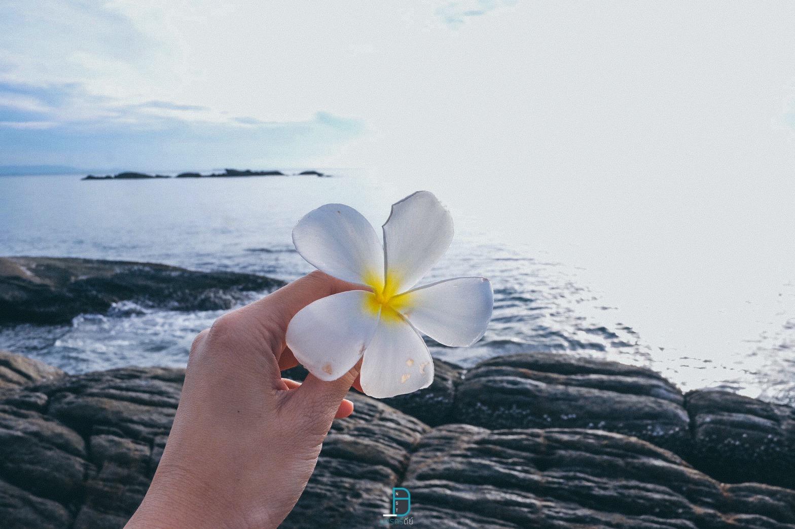 ปิดท้ายด้วยรูป-ดอกไม้สีขาววิวทะเล-เข้ากันและได้ฟิลจริงๆครับ  ที่พัก,สิชล,เขาพลายดำ,นครศรี,วิวทะเล,มินิมอล,ยุโรป,วิวหลักล้าน