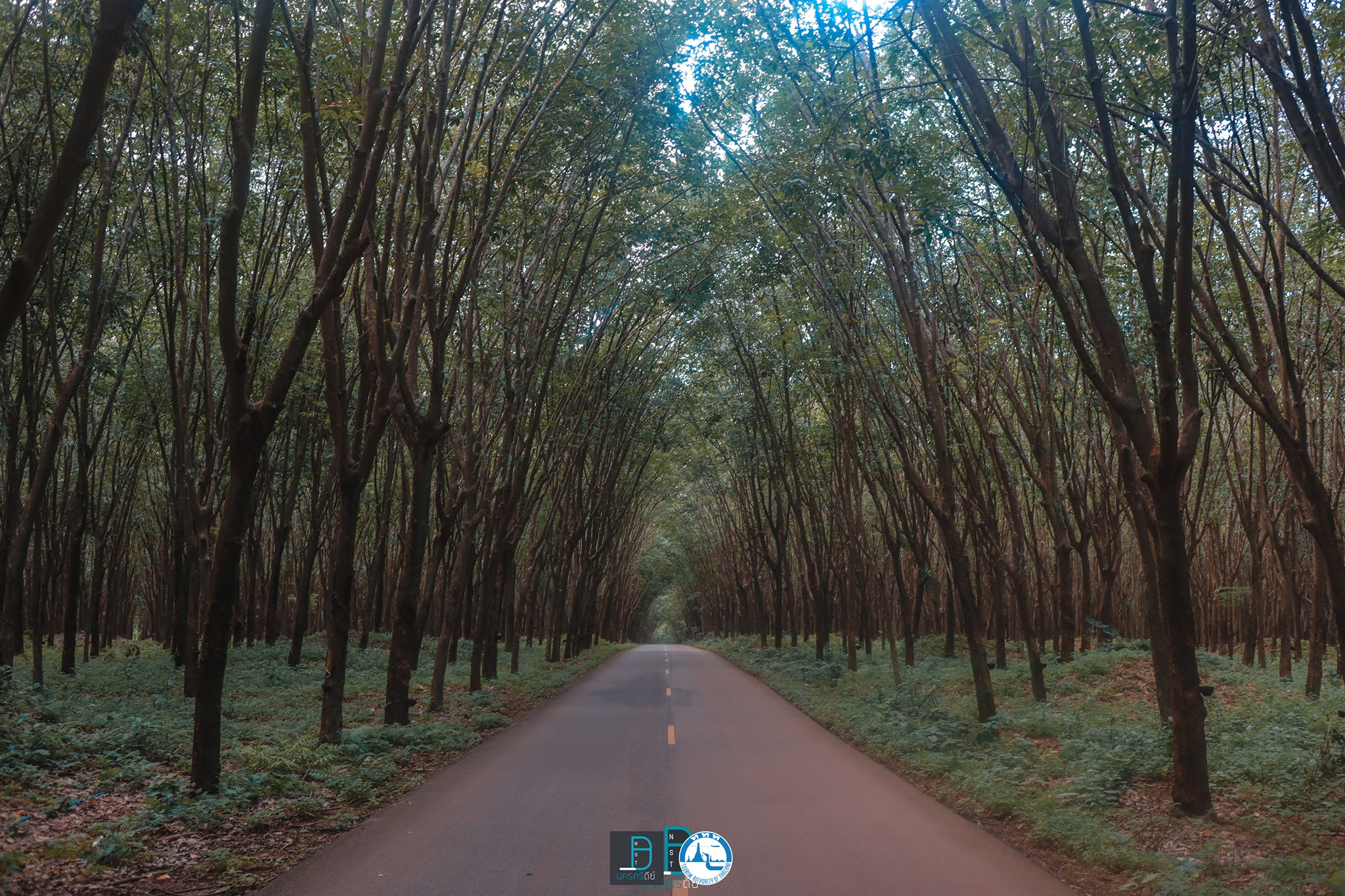 19.-อุโมงค์ต้นยาง-ขนอม นครศรีธรรมราช,จุดเช็คอิน,ที่ท่องเที่ยว,ของกิน,โกโก้,TAT,การท่องเที่ยวแห่งประเทศไทย