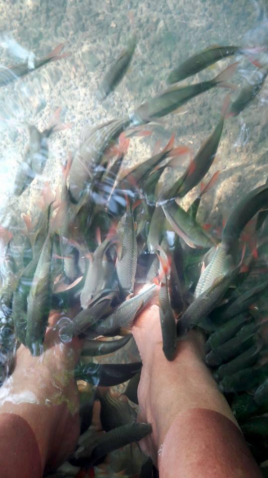 19.-สวนตาสรรค์-ขนอม-ปลาตอด---สปาเท้า รายละเอียด-คลิก แหล่งท่องเที่ยว,นครศรี,จุดเช็คอิน,จุดถ่ายรูป,คาเฟ่,ของกิน,จุดกิน