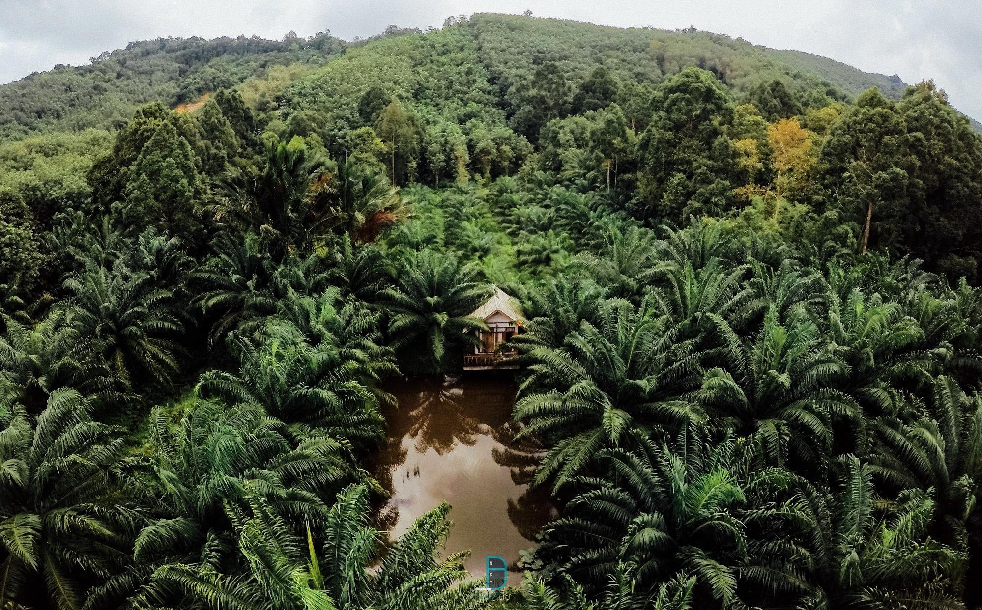 5.-บ้านไร่ชายเขาฟาร์มสเตย์-เชียรใหญ่-ฟาร์มสเตย์เล็กๆ-ที่เต็มไปด้วยธรรมชาติ-ให้ได้พักผ่อนชาร์จแบตกันอย่างเต็มที่-และยังมีกิจกรรมวิถีชุมชนให้เลือกทำด้วยนะครับ ธรรมชาติ,ลำธาร,ป่าเขา,นครศรีธรรมราช,เมืองคอน,รวมรีวิว,จุดเช็คอิน