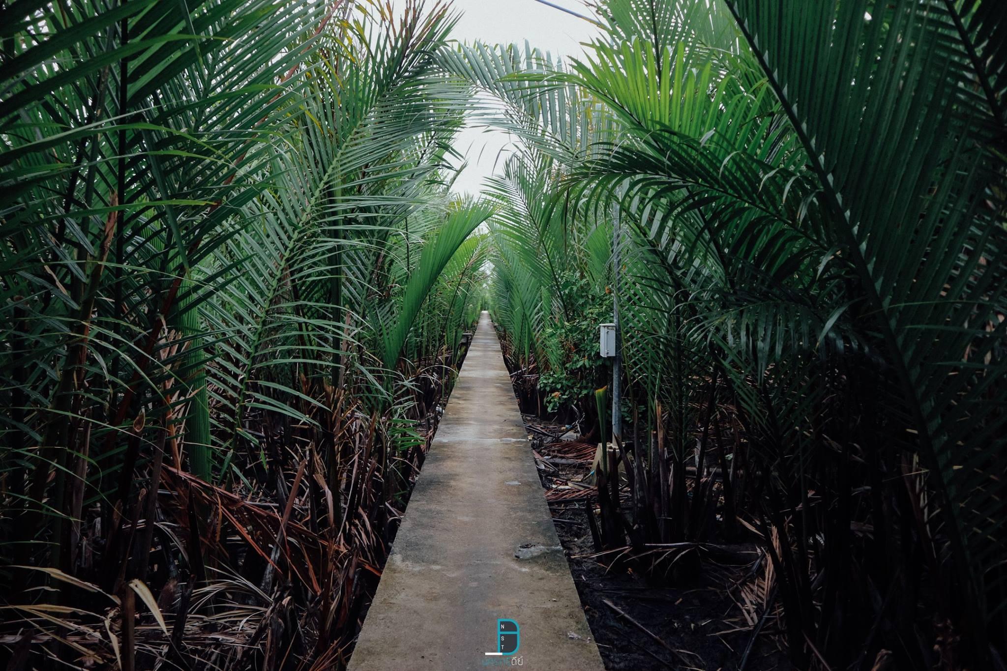 11.-เกาะไชย-ปากพนัง-ด้วยระยะทางการเดินชมป่าแหล่งท่องเที่ยวใหม่-กว่า-3-กิโลเมตร--หรือเกินไม่รู้-555---ขอบอกว่าสวยงามมากๆได้สัมผัสถึงธรรมชาติและวิถีชีวิตชุมชนครับ ธรรมชาติ,ลำธาร,ป่าเขา,นครศรีธรรมราช,เมืองคอน,รวมรีวิว,จุดเช็คอิน